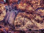 Tree - autumn