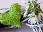 Snowdrops and Green Heart