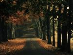'Strollin' thru the woods'....'lol'