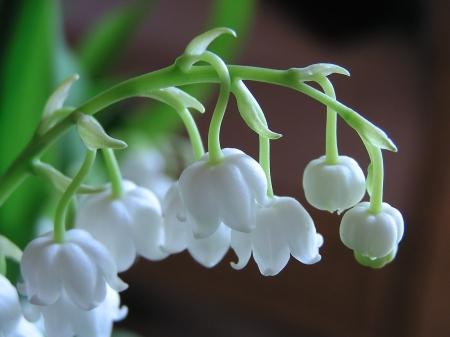 White bells flowers nature background wallpapers on desktop white bells flowers bells white stem mightylinksfo