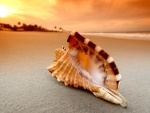 Conch Shell on Sunset Beach