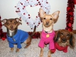 Oliver, Lucy and Zoey Valentine's Day