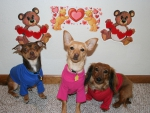 Fur Kids on Valentines Day