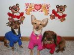 Fur Kids on Valentines Day