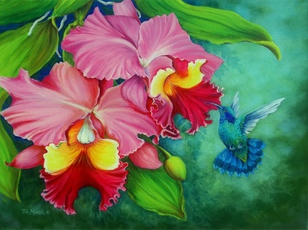 Green Violet Ear Humingbird with Orchids - ear, hummingbird, orchid, painting, flower, green, art, leaves, violet