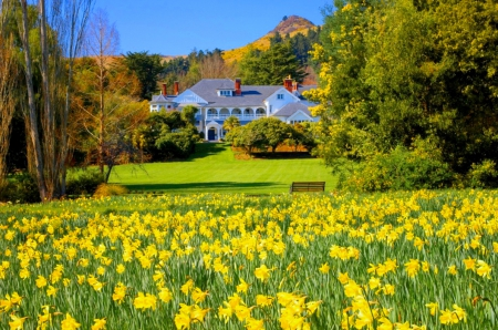 Beautiful garden - pretty, house, lovely, beautiful, spring, trees, freshness, manor, countryside, narcissus, flowers, garden, nature, meadow