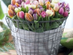Α basket of fresh tulips