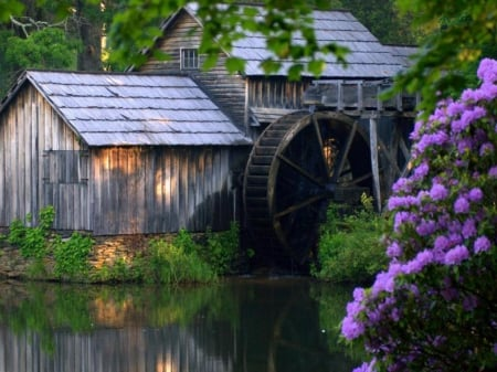 Old Crystal Mill in Colorado - house, water, watermill, blossoms, spring
