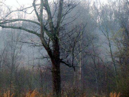 Fog In The Air - Trees, Nature, Forces of Nature, Sky, Country