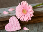 Pink Gerbera and Heart