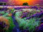 Pathway of Flowers