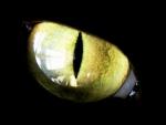 Yellow cat eye