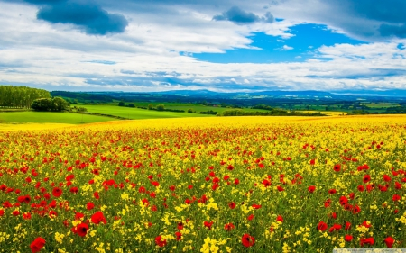 Flower Field In Spring Flowers Nature Background Wallpapers On