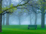 Peaceful place in the park
