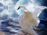 Swan Fantasy