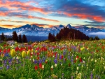 Colorful mountain meadow