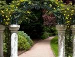 Garden Arch Tree