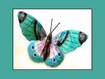 Butterfly_D