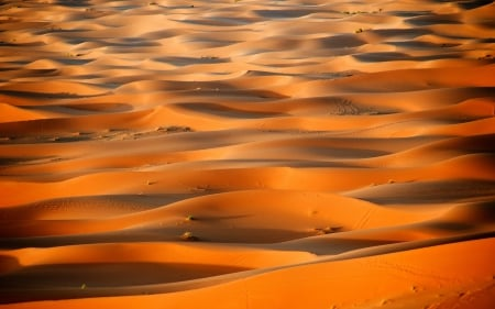 Sahara - hot, sand, nature, desert