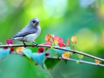 Spring Little Bird