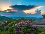 Mountains - flowers