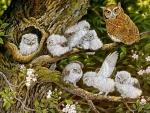 Owl Chicks