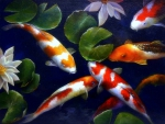 Fish Gatherings