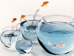 fish bowl jump