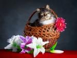 Spring~Easter Cat
