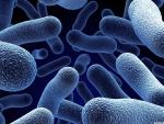 mirco organisms