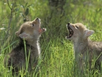 WE CAN HOWL