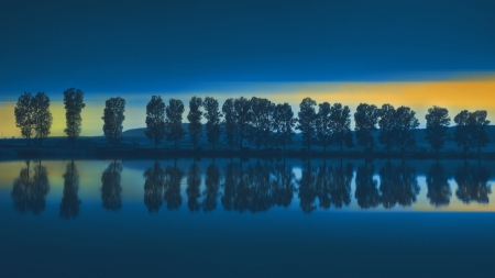 Fishing Lake - tree, lake, night, fishing