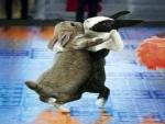 Happy Easter - Bunny dance