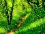 A BEAUTIFUL FOREST PATH