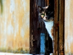 beautiful cat in a doorway