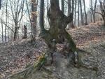 Copac singular