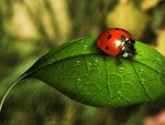 Shower for Ladybug