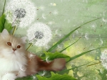 Fluffy Cat and Dandelions