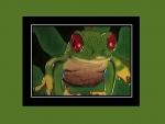 Tree frog tile