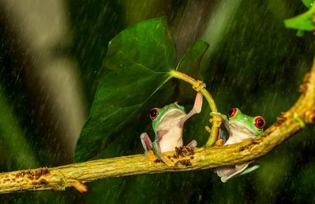 Natural Umbrella Frog Twig Funny Leaf