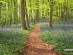 Blue bell field pathway