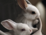 So cute rabbits