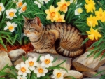 Spring Tabby Cat