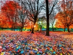 ENCHANTING AUTUMN NATURE