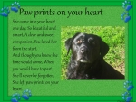 FOR DEAR SUE...''3WAGGINTAILS''