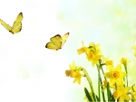 Daffodils and Butterflies