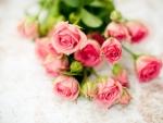 romantic vintage roses