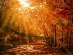 Rays in Autumn Forest