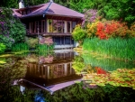 Pond tranquility