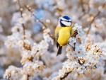 Cute Spring Bird
